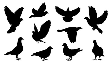 dove silhouettes on the white background