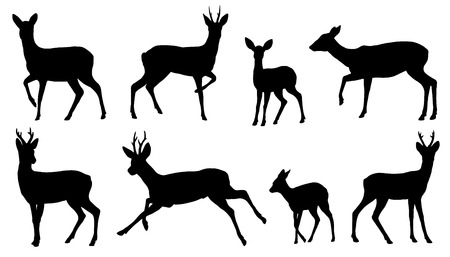 roe deer silhouettes on the white background Stock Illustratie