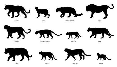 panthera: wildcats silhouettes on the white background Illustration