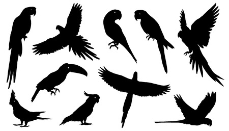 parakeet: parrot silhouettes on the white background