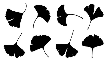 ginkgo leaf silhouettes on the white background Çizim