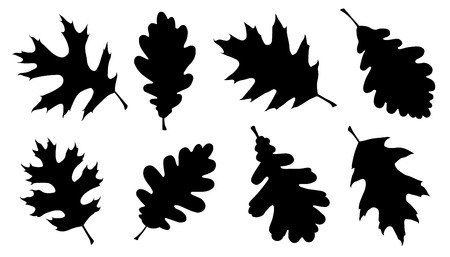 oak leaf silhouettes on the white background 矢量图像