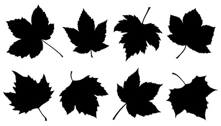 sycamore leaf: sycamore leaf silhouettes on the white background