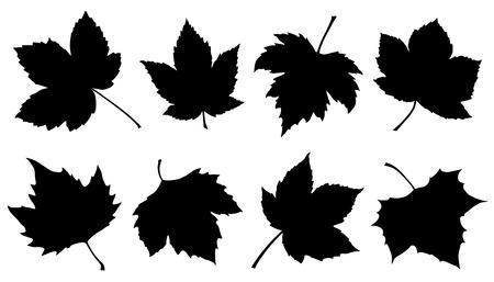 sycomore feuilles silhouettes sur le fond blanc Vecteurs