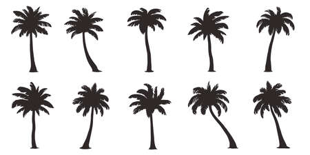 Various coconut palm on the white