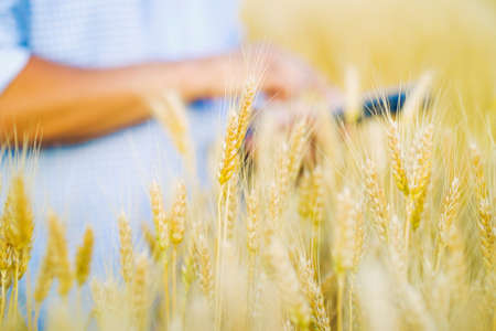 Farmer working in wheat field and making notes on tablet