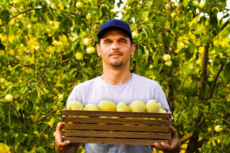 Bearded farmer holding box of apples in sunny orchard
