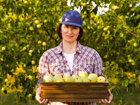 Cheerful gardener carrying box of apples in sunny orchard