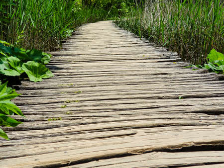 Shabby wooden boardwalk with green grass on sides
