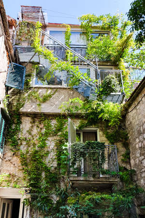 Townhouse covered with green ivy on sunny day
