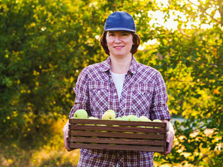 Happy farmer walking in sunny orchard with box of apples 스톡 콘텐츠