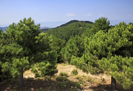 sithonia: Scenic pine trees in mountains. Sithonia peninsula in northern Greece.
