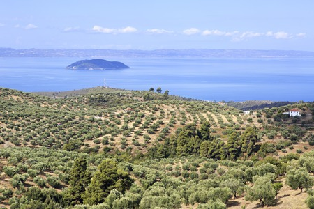 sithonia: Olive groves on the Aegean coast. Sithonia peninsula in northern Greece. Stock Photo