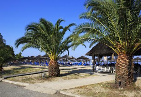 sithonia: Palme sulla spiaggia di Porto Carras Grand Resort. Sithonia.