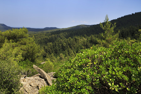 sithonia: Bella vegetazione in montagna. Penisola di Sithonia nella Grecia settentrionale. Archivio Fotografico