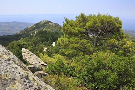sithonia: Beautiful vegetation and rocks in the mountains. Sithonia peninsula in northern Greece. Stock Photo