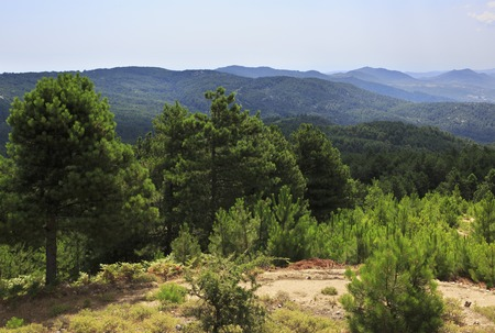 sithonia: Beautiful pine trees on a mountain top. Sithonia peninsula in northern Greece. Stock Photo