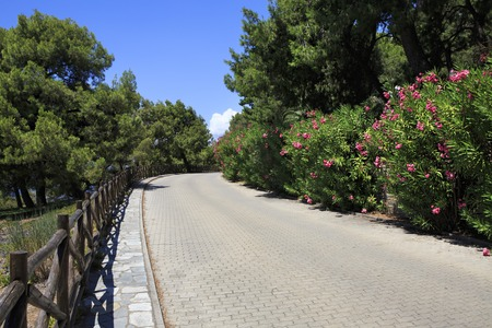 sithonia: Pavement road and blooming vegetation. Sithonia peninsula in northern Greece. Stock Photo