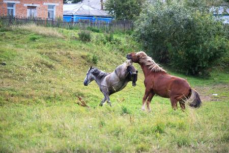 Hofmakerij paarden. Stockfoto - 34369738