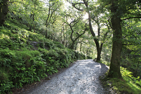 relict: Footpath in relict forest after the rain. Wicklow Mountains National Park. Stock Photo
