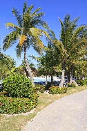 trees services: Area of hotel Sol Cayo Largo. Cuba.