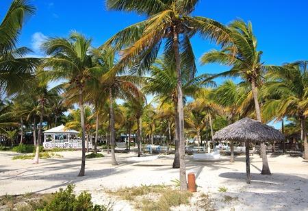 trees services: Area of hotel Melia Cayo Guillermo. Cuba.