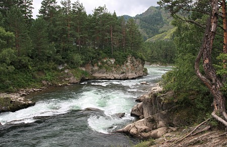 chemal: Mountain river of Chemal. Altai in Russia.