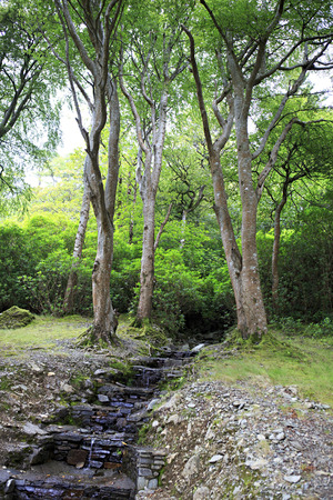 connemara: Landscaping Kylemore Abbey. National park Connemara in Ireland. Stock Photo
