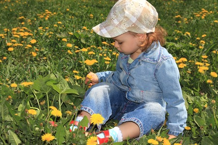 collects: A little girl collects dandelions.