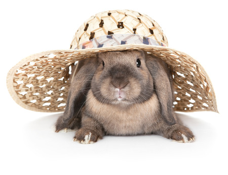 Dwarf rabbit in a straw hat