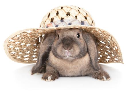 Dwerg konijn in een strooien hoed Stockfoto - 35109612