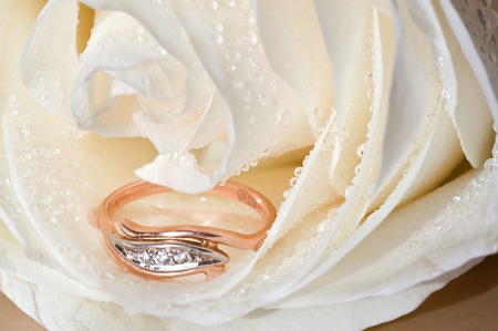token: Golden ring and a white rose. Gift as a token of love.