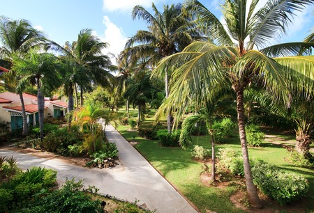 trees services: Area of hotel Sol Cayo Guillermo. Cuba. Stock Photo