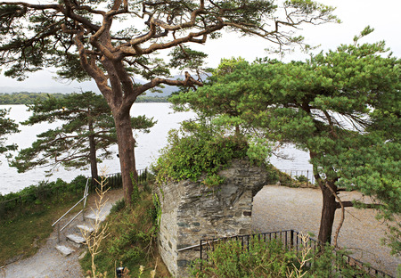 lough: Large pine on Lough Leane Lower Lake. View from Lake Hotel Killarney. Stock Photo