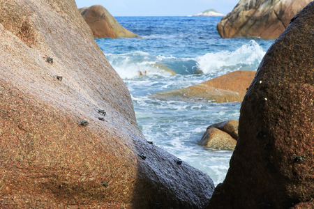decapod: Crabs on the granite boulders on the shore of the Indian Ocean. Island Praslin in Seychelles.