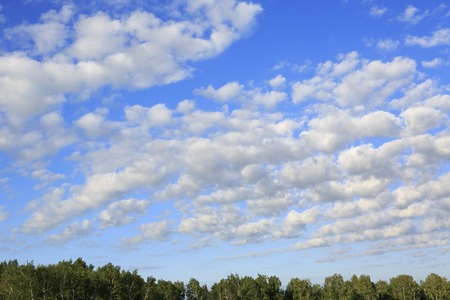 cirrus: Beautiful cumulus cirrus clouds over the forest. Stock Photo