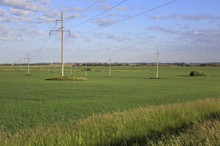 power lines: Power lines on a green field with seedlings of cereals. Stock Photo