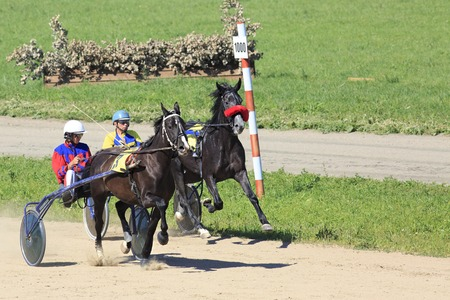 filly: Novotyryshkino, Russia - August 01, 2015: Horse racing at the Hippodrome Sibirskoe podvorie Editorial