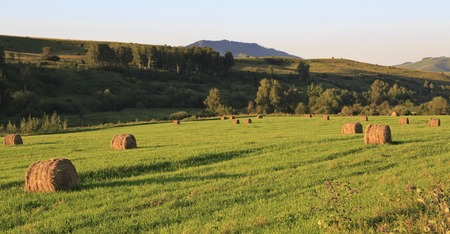 haymaking: Beautiful haystacks on the green lawn in the mountains. Altai Krai in Russia. Stock Photo