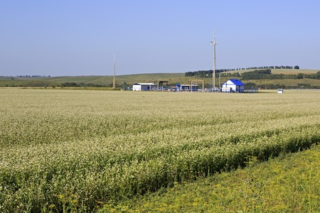 gas distribution: Gas distribution station in the field with buckwheat. Altai Krai in Russia. Stock Photo