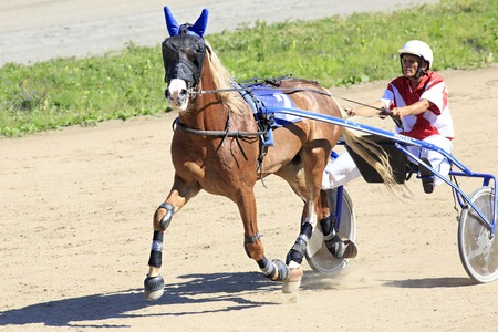 Novotyryshkino, Russia - August 01, 2015: Trotting Races at the Hippodrome Sibirskoe podvorie 에디토리얼