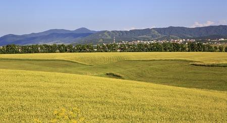belokurikha: Beautiful agricultural fields and the town of Belokurikha. Altai Krai in Russia.