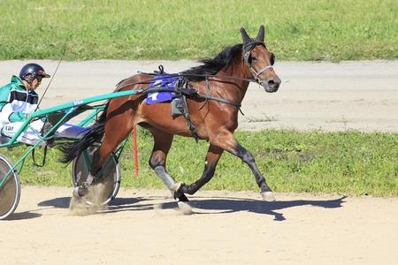 blinders: Novotyryshkino, Russia - August 01, 2015: Trotting Races at the Hippodrome Sibirskoe podvorie Editorial