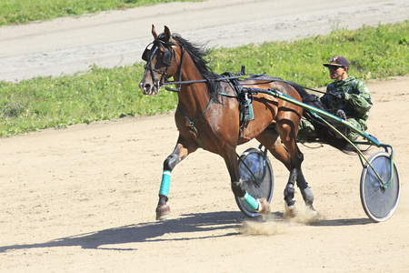 Novotyryshkino, Russia - August 01, 2015: Trotting Races at the Hippodrome Sibirskoe podvorie 新聞圖片