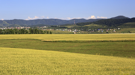 belokurikha: Agricultural fields and the town of Belokurikha. Altai Krai in Russia.