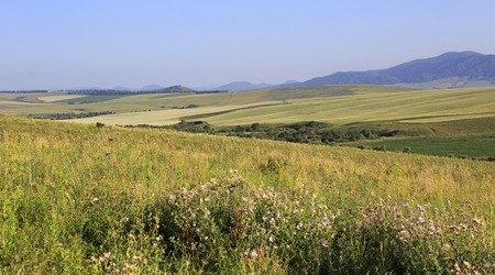 altai mountains: Agricultural fields in the hills of the Altai Mountains. Altai Krai in Russia.