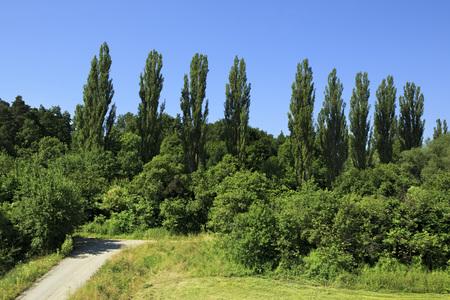 suburbs: Beautiful hardwood trees in the suburbs of Prague.