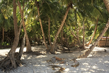 argent: Palm trees at Curieuse Island in the Indian Ocean. Stock Photo