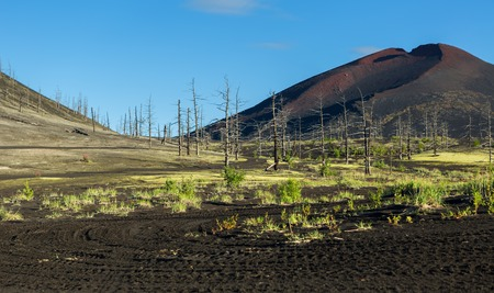 Dead wood - a consequence of a catastrophic release of ash during the eruption of the volcano in 1975 Tolbachik north breakthrough - Kamchatka Stock Photo