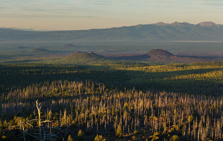 consequence: Dead wood - a consequence of a catastrophic release of ash during the eruption of the volcano in 1975 Tolbachik north breakthrough - Kamchatka Stock Photo